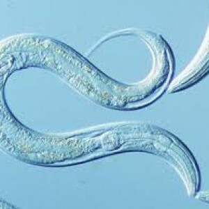 Paraziți în tratamentul nazal, Paraziți în tratamentul nazal al gâtului. Papilloma skin lesion